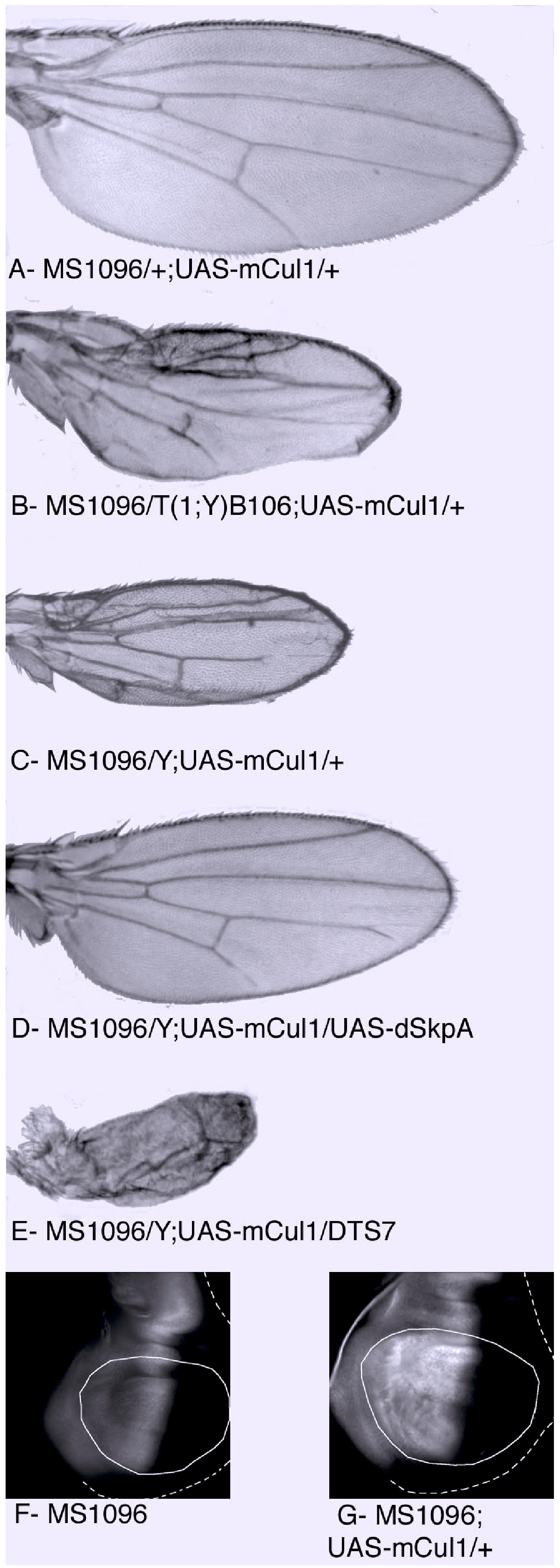 https://static-content.springer.com/image/art%3A10.1186%2F1471-2156-4-9/MediaObjects/12863_2003_Article_58_Fig2_HTML.jpg