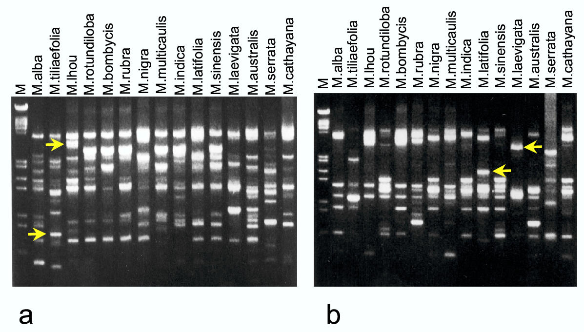 https://static-content.springer.com/image/art%3A10.1186%2F1471-2156-5-1/MediaObjects/12863_2003_Article_173_Fig1_HTML.jpg