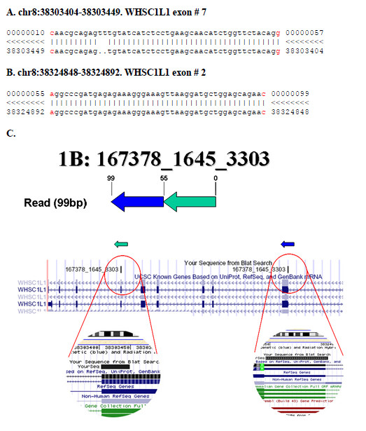 https://static-content.springer.com/image/art%3A10.1186%2F1471-2164-10-163/MediaObjects/12864_2008_Article_2047_Fig6_HTML.jpg