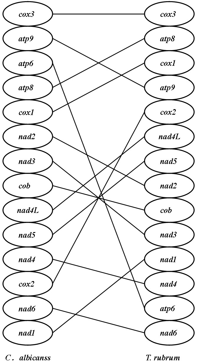 https://static-content.springer.com/image/art%3A10.1186%2F1471-2164-10-238/MediaObjects/12864_2008_Article_2122_Fig3_HTML.jpg