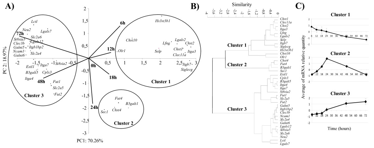 https://static-content.springer.com/image/art%3A10.1186%2F1471-2164-10-483/MediaObjects/12864_2009_Article_2367_Fig2_HTML.jpg