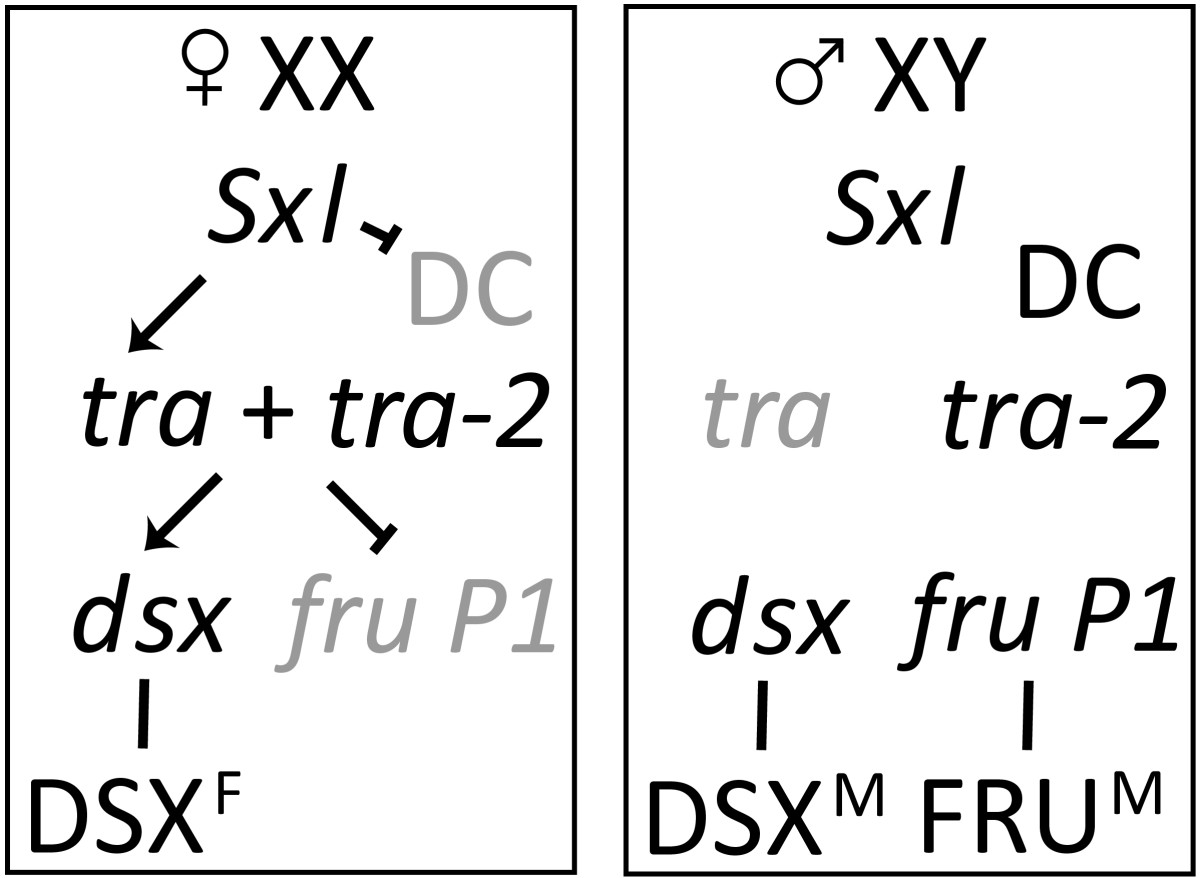 https://static-content.springer.com/image/art%3A10.1186%2F1471-2164-10-80/MediaObjects/12864_2008_Article_1964_Fig1_HTML.jpg