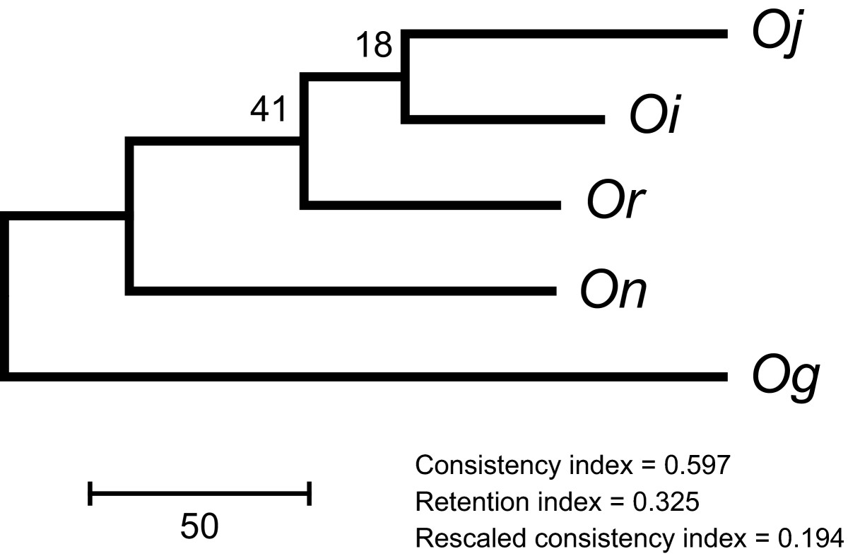 https://static-content.springer.com/image/art%3A10.1186%2F1471-2164-11-121/MediaObjects/12864_2009_Article_2715_Fig1_HTML.jpg