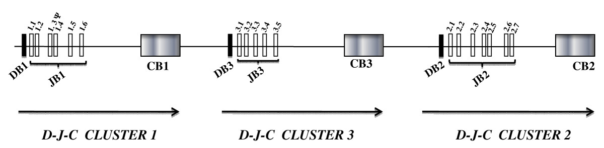 https://static-content.springer.com/image/art%3A10.1186%2F1471-2164-11-3/MediaObjects/12864_2009_Article_2597_Fig1_HTML.jpg