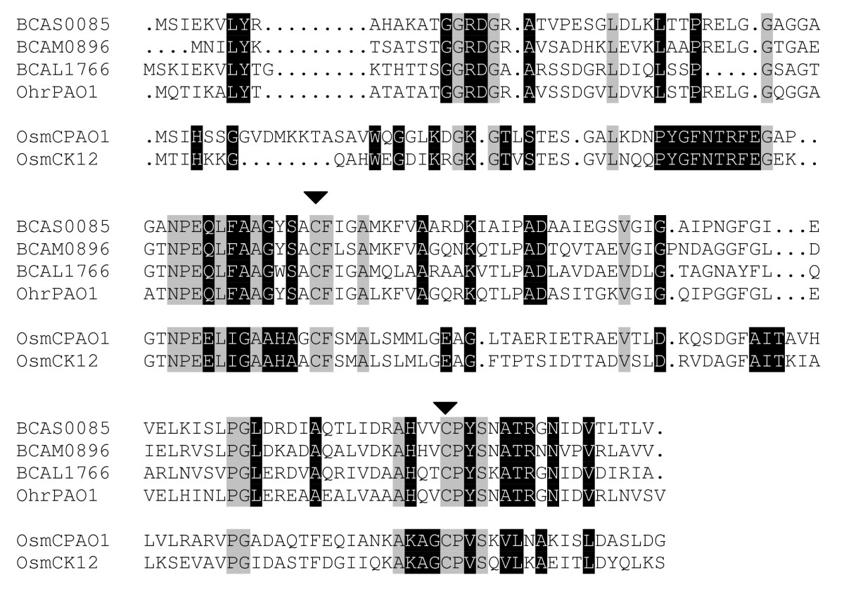 https://static-content.springer.com/image/art%3A10.1186%2F1471-2164-11-90/MediaObjects/12864_2009_Article_2684_Fig4_HTML.jpg