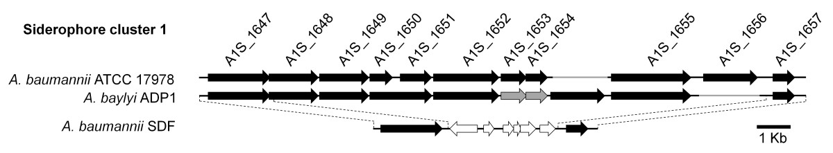 https://static-content.springer.com/image/art%3A10.1186%2F1471-2164-12-126/MediaObjects/12864_2010_Article_3262_Fig9_HTML.jpg