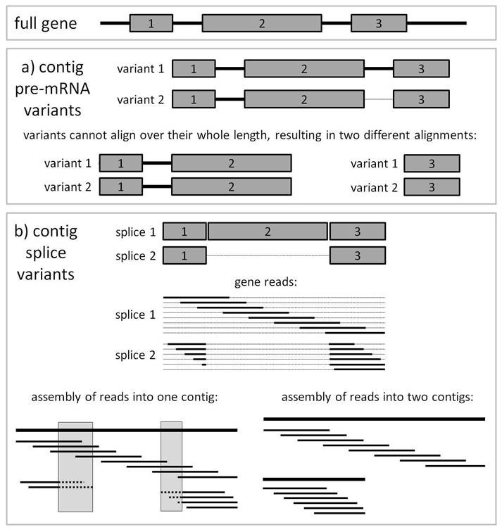 https://static-content.springer.com/image/art%3A10.1186%2F1471-2164-12-283/MediaObjects/12864_2010_Article_3421_Fig2_HTML.jpg