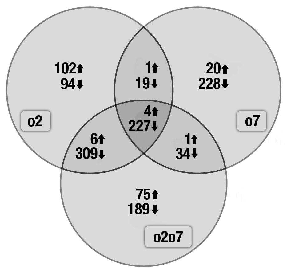 https://static-content.springer.com/image/art%3A10.1186%2F1471-2164-12-41/MediaObjects/12864_2010_3180_Fig4_HTML.jpg