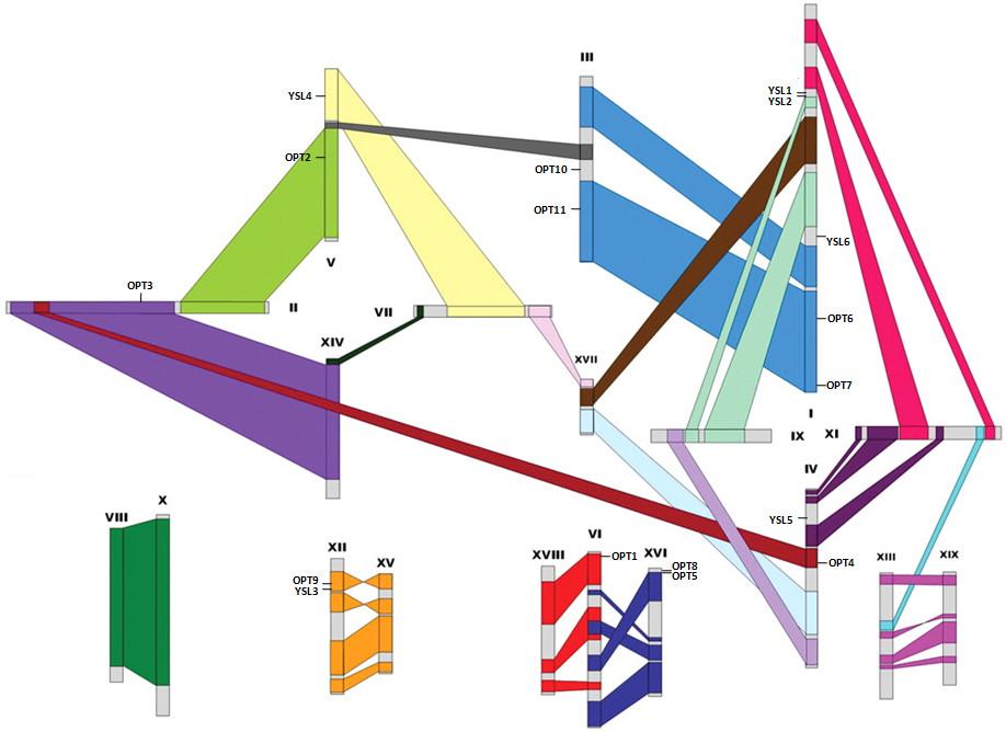 https://static-content.springer.com/image/art%3A10.1186%2F1471-2164-12-465/MediaObjects/12864_2011_3604_Fig2_HTML.jpg