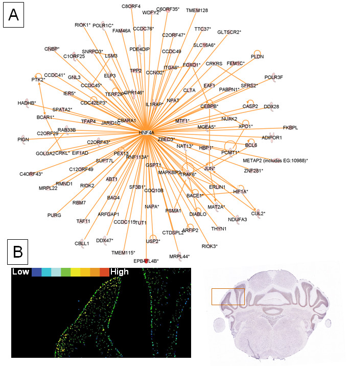 https://static-content.springer.com/image/art%3A10.1186%2F1471-2164-12-499/MediaObjects/12864_2010_Article_3672_Fig5_HTML.jpg