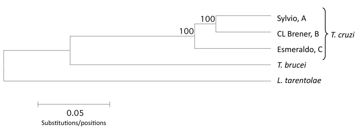 https://static-content.springer.com/image/art%3A10.1186%2F1471-2164-12-58/MediaObjects/12864_2010_3196_Fig1_HTML.jpg