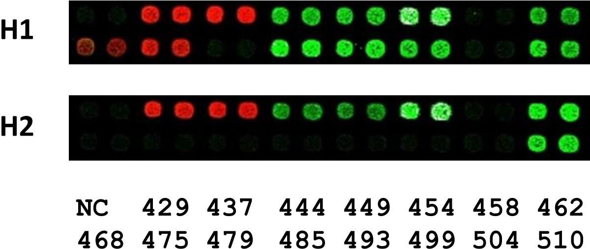 https://static-content.springer.com/image/art%3A10.1186%2F1471-2164-12-78/MediaObjects/12864_2010_3211_Fig1_HTML.jpg