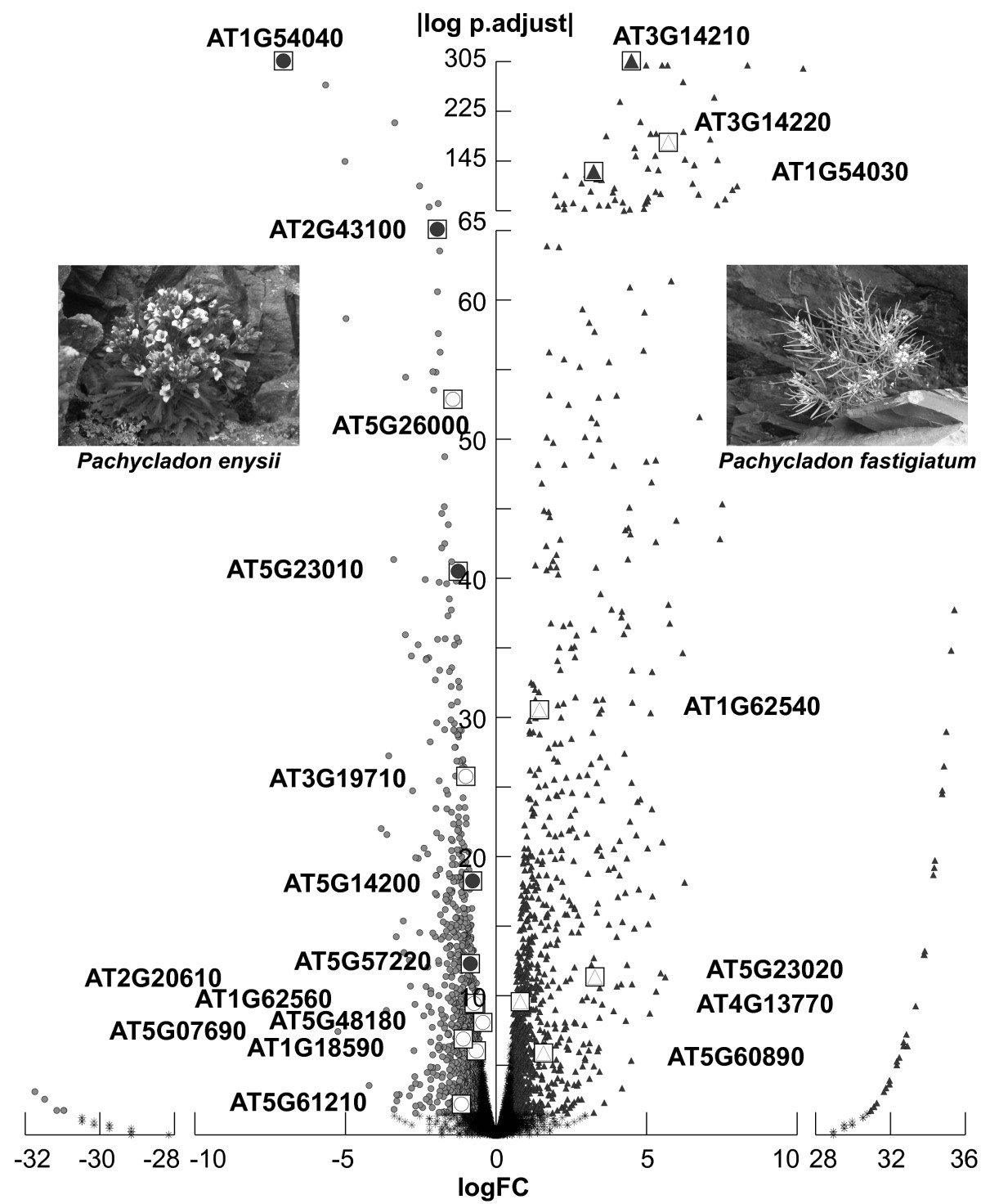 https://static-content.springer.com/image/art%3A10.1186%2F1471-2164-13-322/MediaObjects/12864_2012_Article_4205_Fig4_HTML.jpg