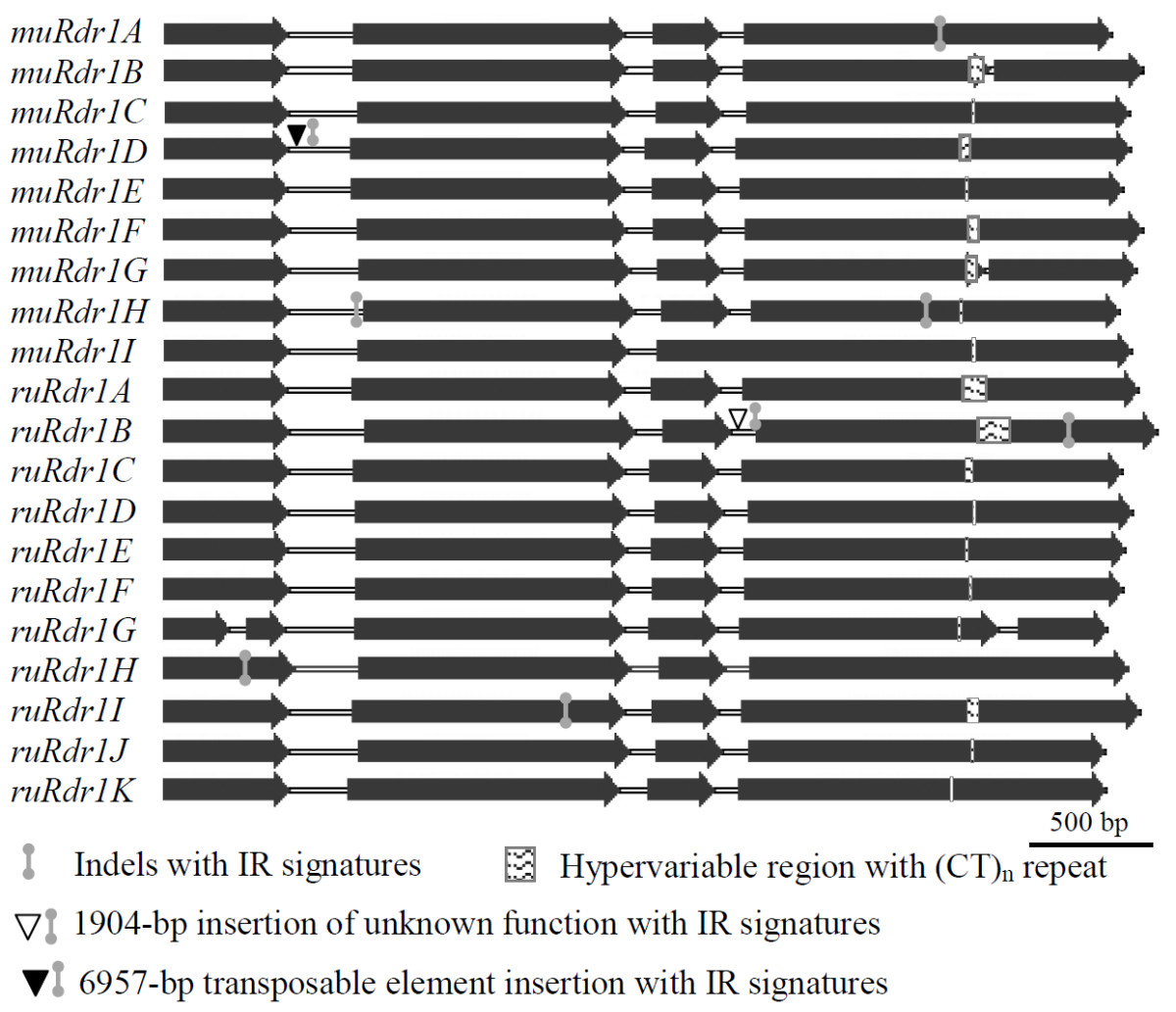 https://static-content.springer.com/image/art%3A10.1186%2F1471-2164-13-409/MediaObjects/12864_2012_Article_4368_Fig2_HTML.jpg