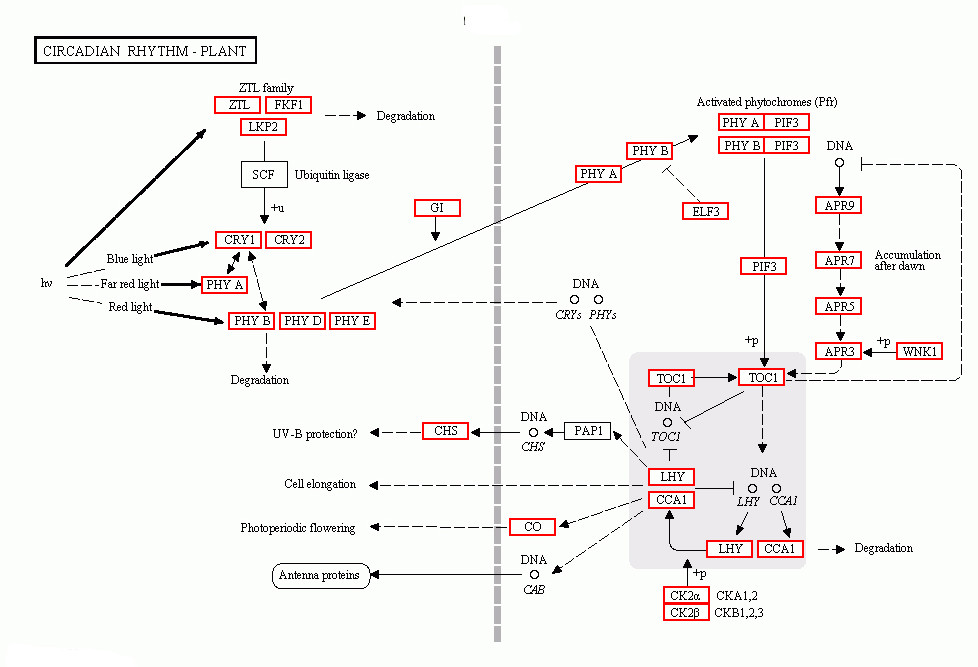 https://static-content.springer.com/image/art%3A10.1186%2F1471-2164-14-279/MediaObjects/12864_2012_Article_4964_Fig5_HTML.jpg