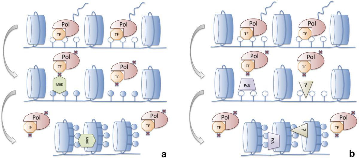 https://static-content.springer.com/image/art%3A10.1186%2F1471-2164-15-119/MediaObjects/12864_2013_Article_5943_Fig1_HTML.jpg