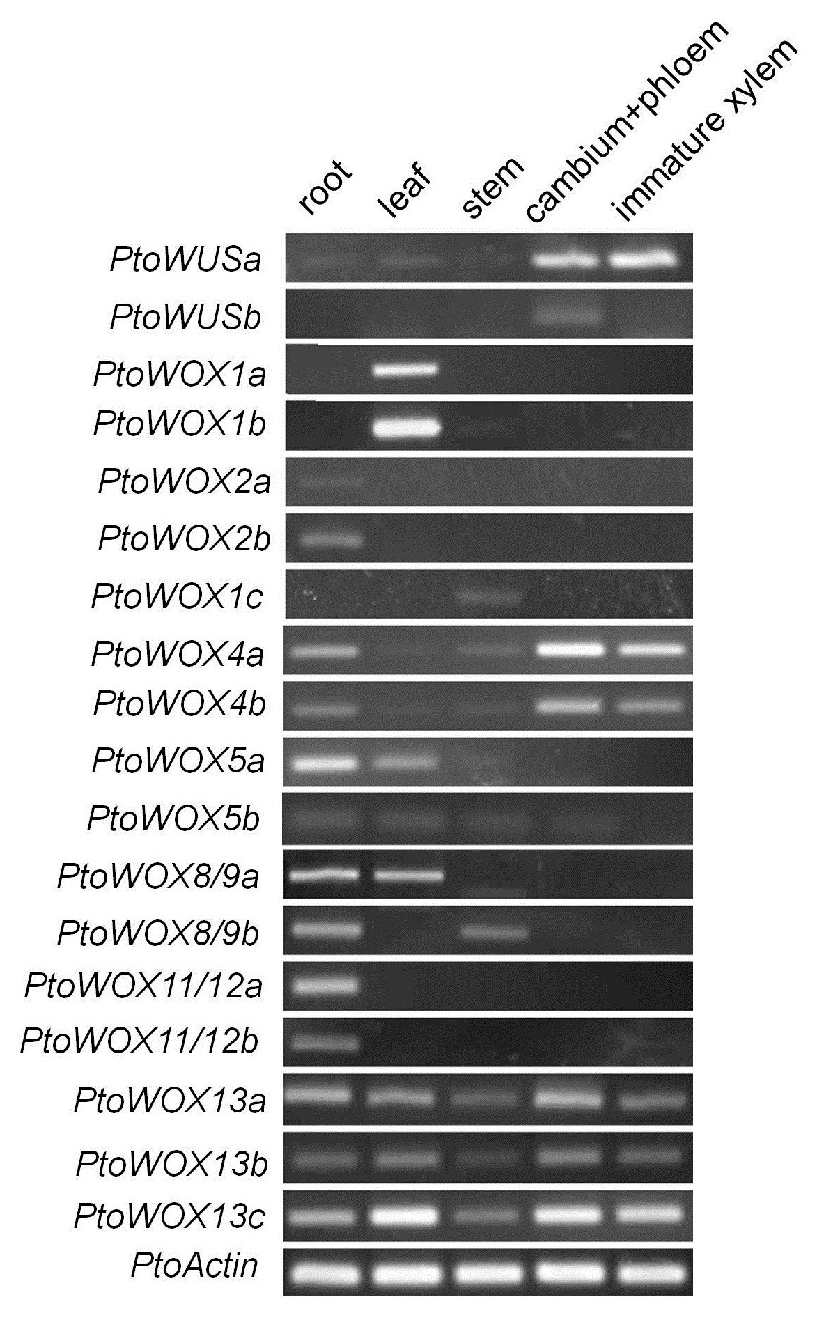https://static-content.springer.com/image/art%3A10.1186%2F1471-2164-15-296/MediaObjects/12864_2013_Article_5988_Fig4_HTML.jpg