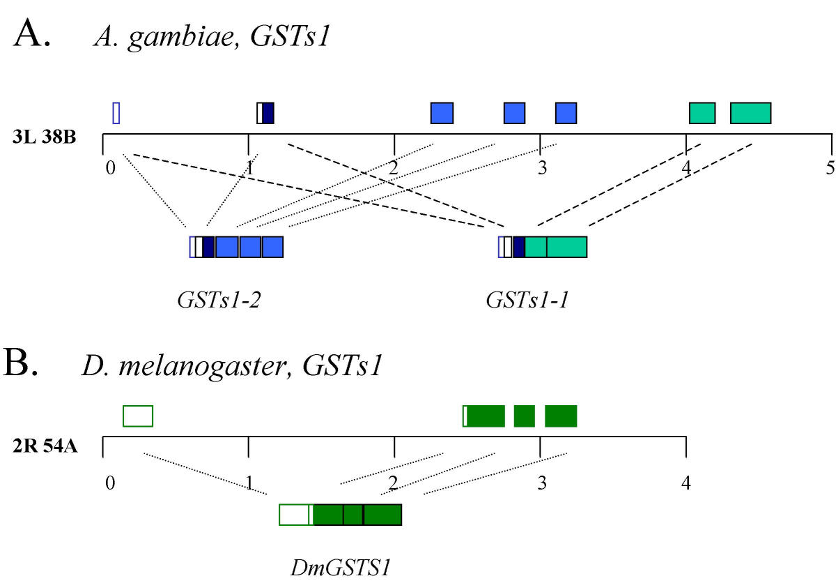 https://static-content.springer.com/image/art%3A10.1186%2F1471-2164-4-35/MediaObjects/12864_2003_Article_84_Fig8_HTML.jpg