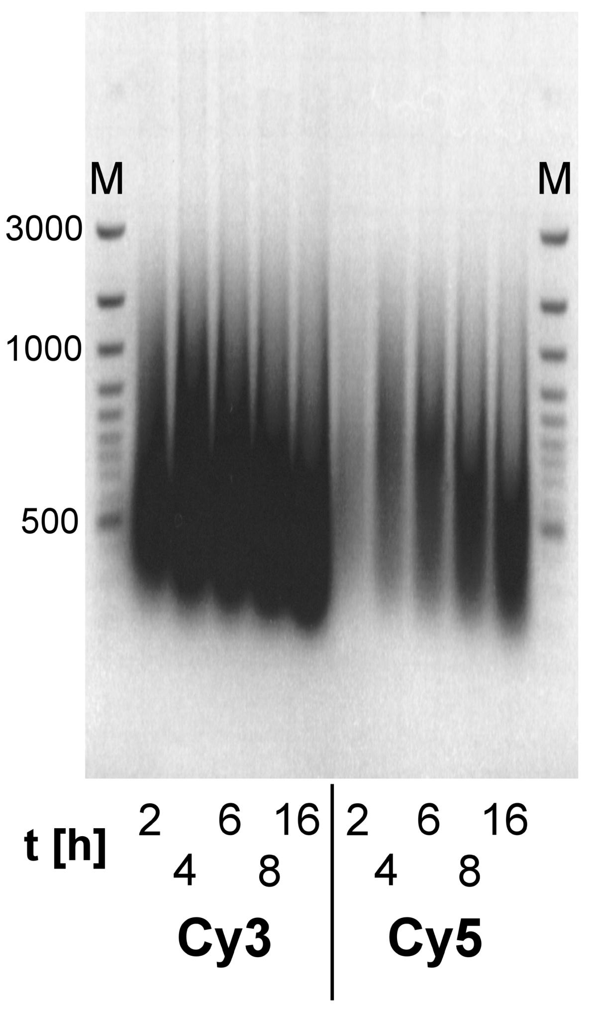https://static-content.springer.com/image/art%3A10.1186%2F1471-2164-4-44/MediaObjects/12864_2003_Article_93_Fig1_HTML.jpg