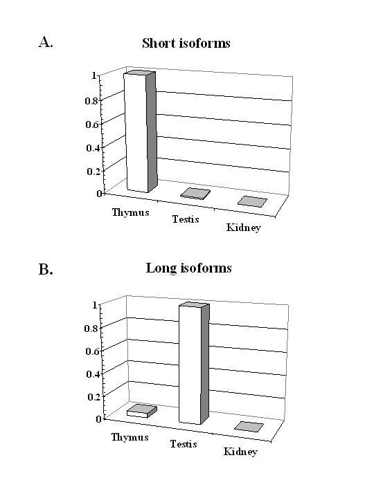 https://static-content.springer.com/image/art%3A10.1186%2F1471-2164-5-41/MediaObjects/12864_2004_Article_143_Fig4_HTML.jpg