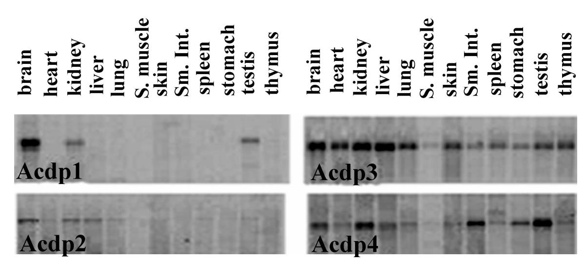 https://static-content.springer.com/image/art%3A10.1186%2F1471-2164-5-7/MediaObjects/12864_2003_Article_109_Fig1_HTML.jpg