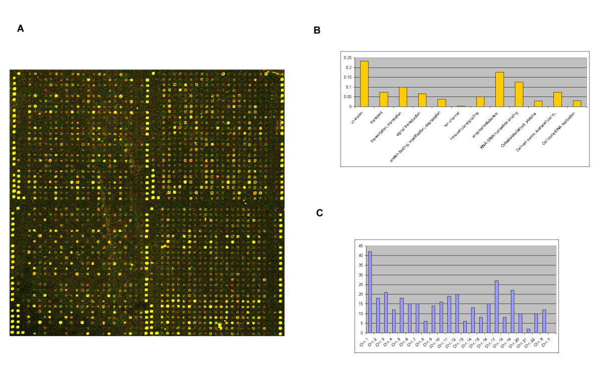 https://static-content.springer.com/image/art%3A10.1186%2F1471-2164-5-83/MediaObjects/12864_2004_Article_185_Fig1_HTML.jpg