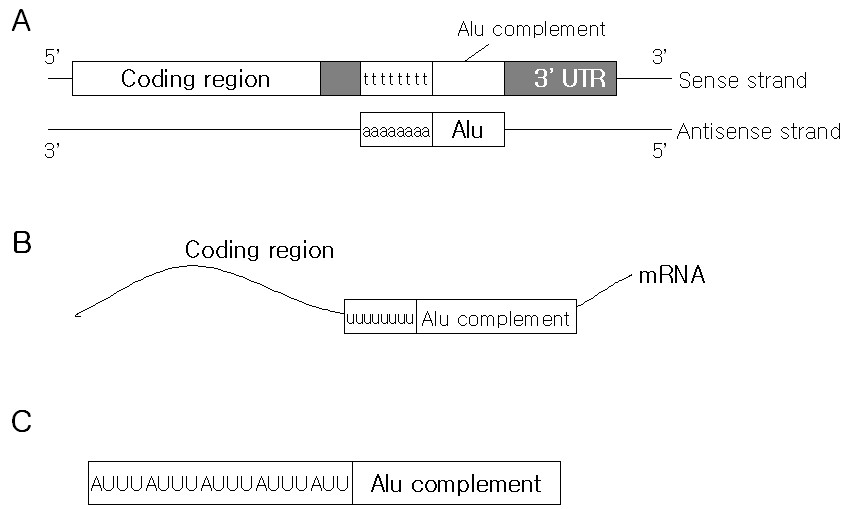https://static-content.springer.com/image/art%3A10.1186%2F1471-2164-5-97/MediaObjects/12864_2004_Article_199_Fig1_HTML.jpg
