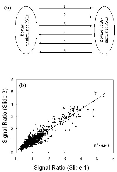 https://static-content.springer.com/image/art%3A10.1186%2F1471-2164-6-135/MediaObjects/12864_2005_Article_336_Fig3_HTML.jpg
