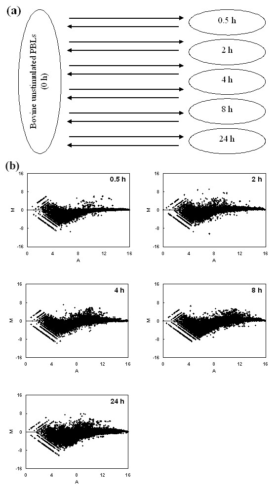 https://static-content.springer.com/image/art%3A10.1186%2F1471-2164-6-135/MediaObjects/12864_2005_Article_336_Fig5_HTML.jpg