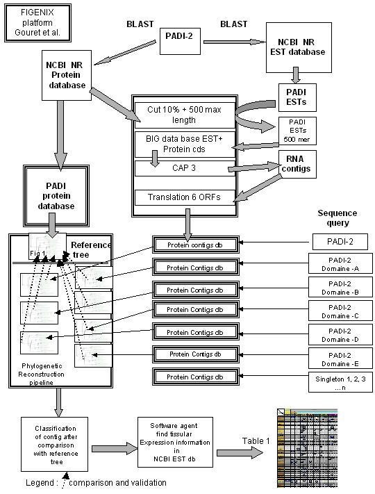 https://static-content.springer.com/image/art%3A10.1186%2F1471-2164-6-153/MediaObjects/12864_2005_Article_354_Fig5_HTML.jpg