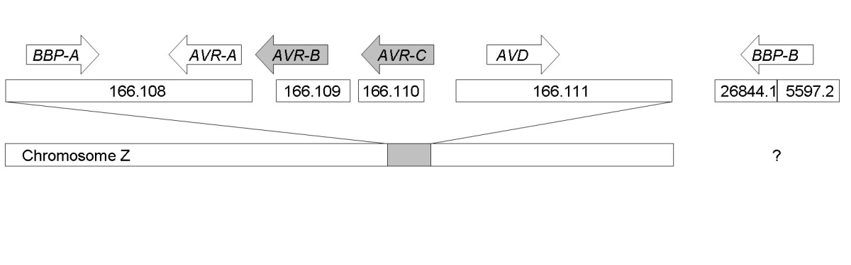 https://static-content.springer.com/image/art%3A10.1186%2F1471-2164-6-41/MediaObjects/12864_2004_Article_242_Fig1_HTML.jpg
