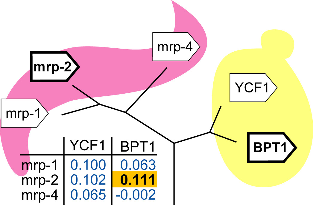 https://static-content.springer.com/image/art%3A10.1186%2F1471-2164-7-10/MediaObjects/12864_2005_Article_393_Fig4_HTML.jpg