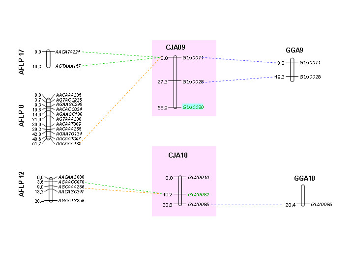 https://static-content.springer.com/image/art%3A10.1186%2F1471-2164-7-101/MediaObjects/12864_2005_Article_484_Fig6_HTML.jpg