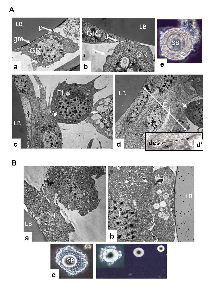 https://static-content.springer.com/image/art%3A10.1186%2F1471-2164-7-160/MediaObjects/12864_2006_Article_543_Fig1_HTML.jpg