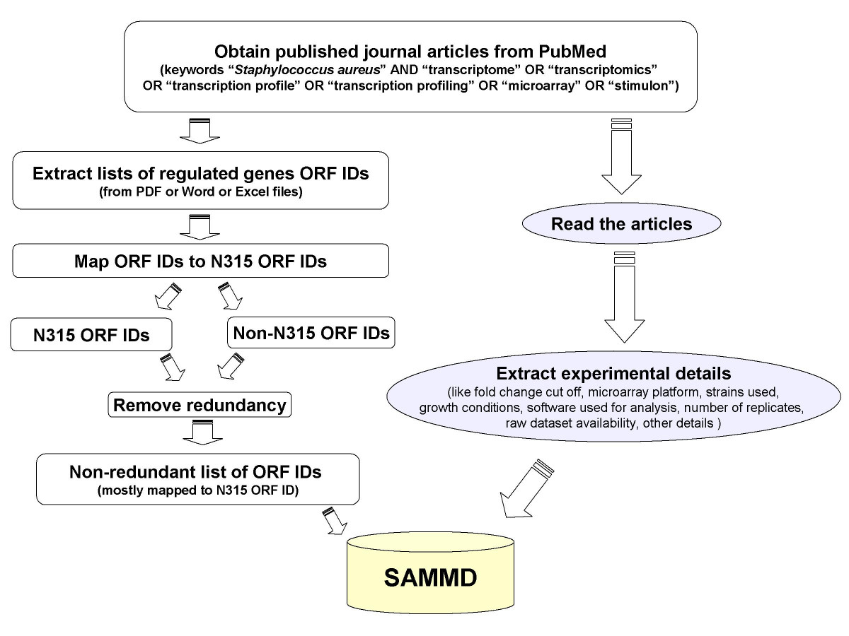 https://static-content.springer.com/image/art%3A10.1186%2F1471-2164-8-351/MediaObjects/12864_2007_Article_1064_Fig1_HTML.jpg