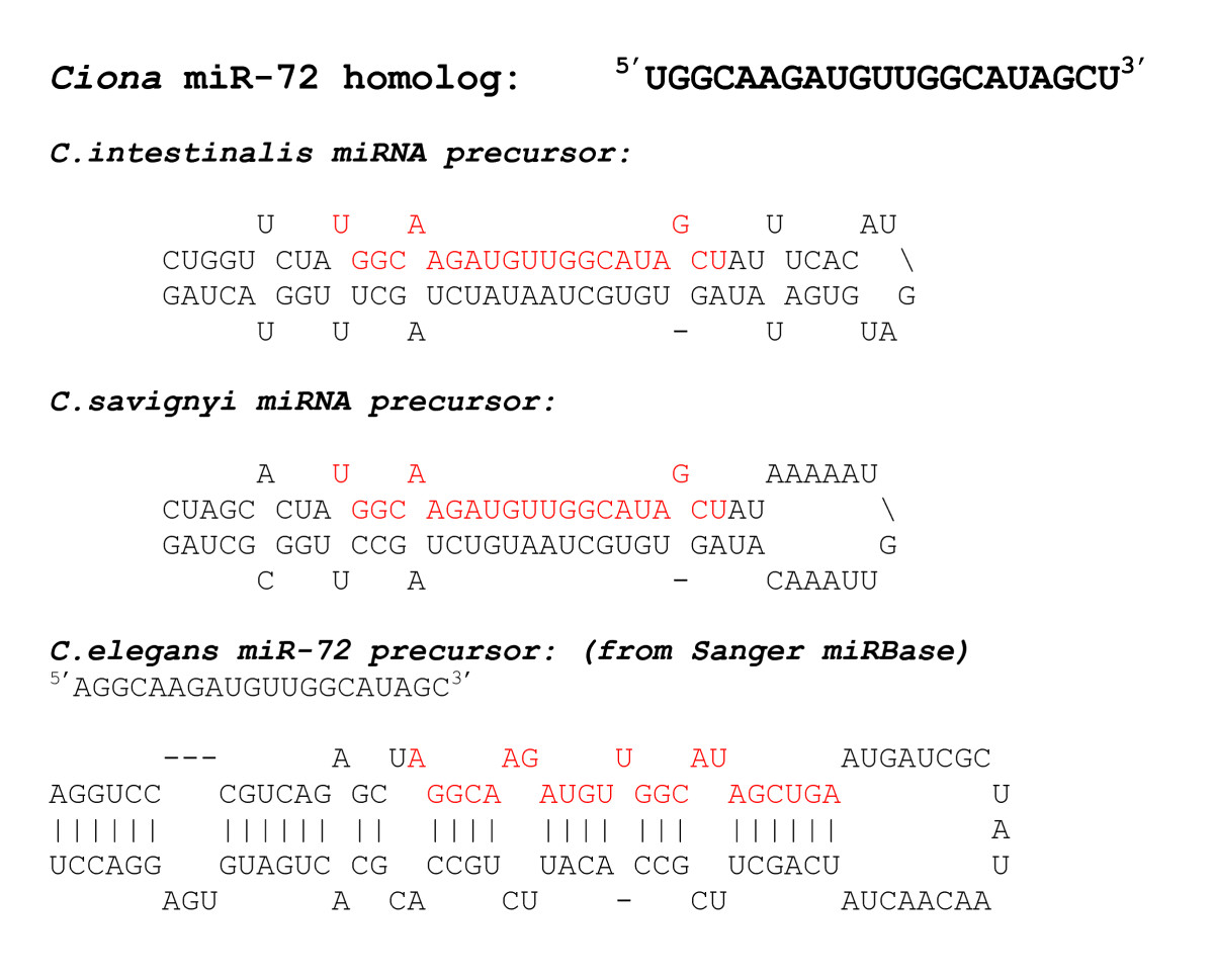 https://static-content.springer.com/image/art%3A10.1186%2F1471-2164-8-445/MediaObjects/12864_2007_Article_1158_Fig2_HTML.jpg