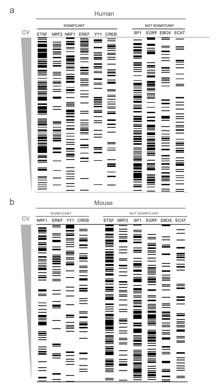 https://static-content.springer.com/image/art%3A10.1186%2F1471-2164-9-18/MediaObjects/12864_2007_Article_1212_Fig3_HTML.jpg