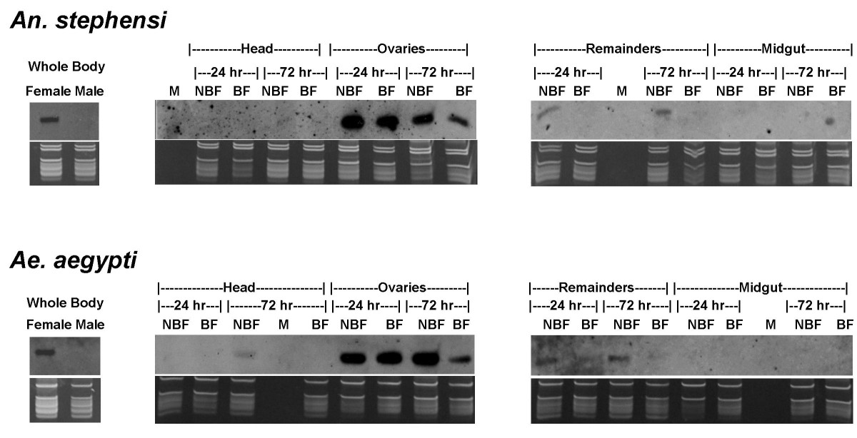https://static-content.springer.com/image/art%3A10.1186%2F1471-2164-9-244/MediaObjects/12864_2007_Article_1437_Fig6_HTML.jpg