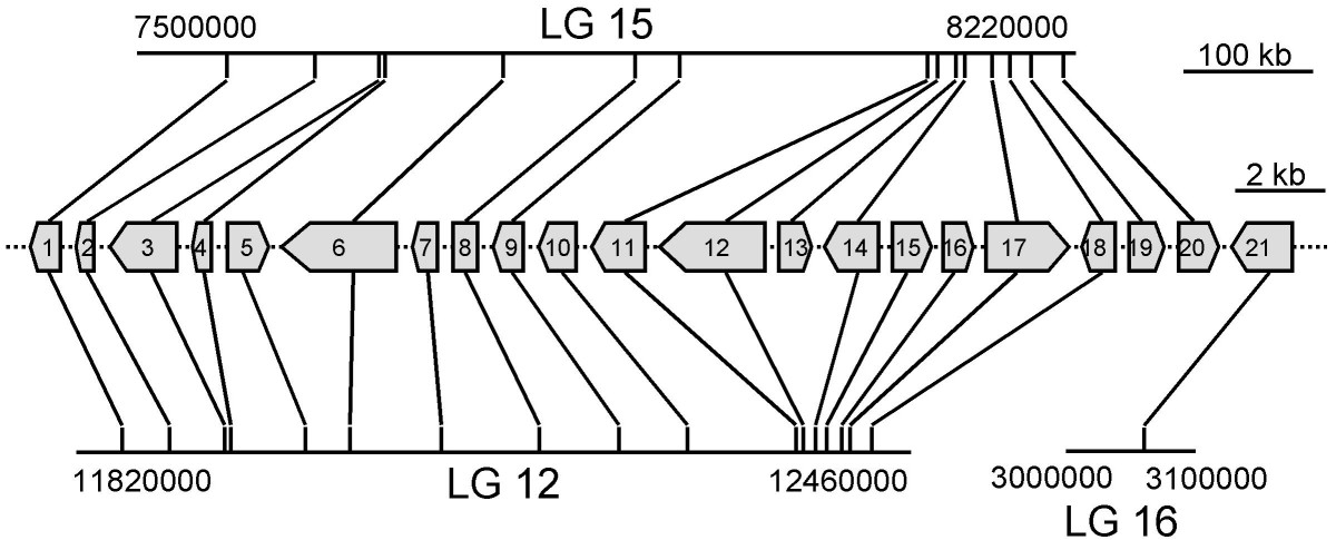https://static-content.springer.com/image/art%3A10.1186%2F1471-2164-9-381/MediaObjects/12864_2008_Article_1574_Fig4_HTML.jpg