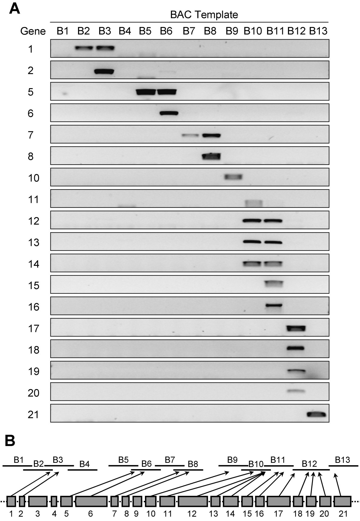 https://static-content.springer.com/image/art%3A10.1186%2F1471-2164-9-381/MediaObjects/12864_2008_Article_1574_Fig6_HTML.jpg