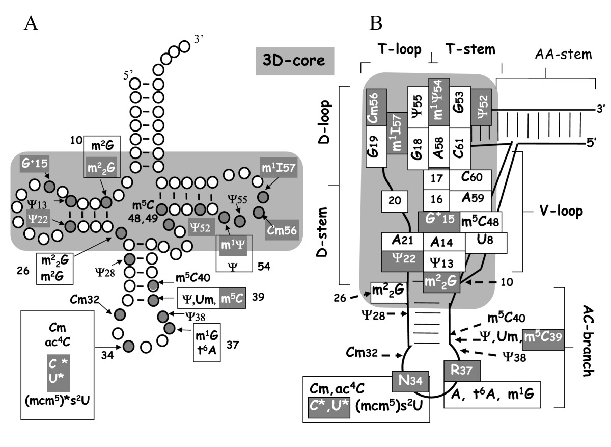 https://static-content.springer.com/image/art%3A10.1186%2F1471-2164-9-470/MediaObjects/12864_2008_Article_1663_Fig1_HTML.jpg