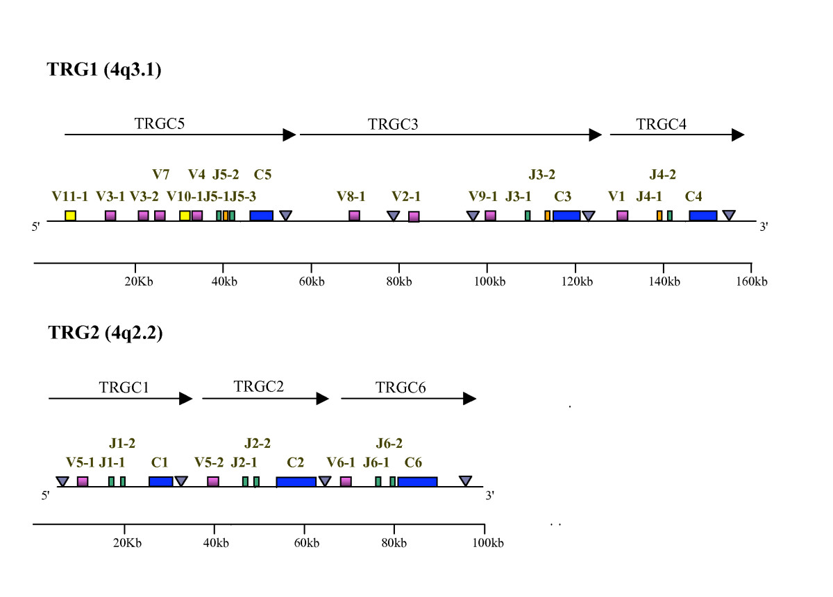 https://static-content.springer.com/image/art%3A10.1186%2F1471-2164-9-81/MediaObjects/12864_2007_Article_1275_Fig1_HTML.jpg