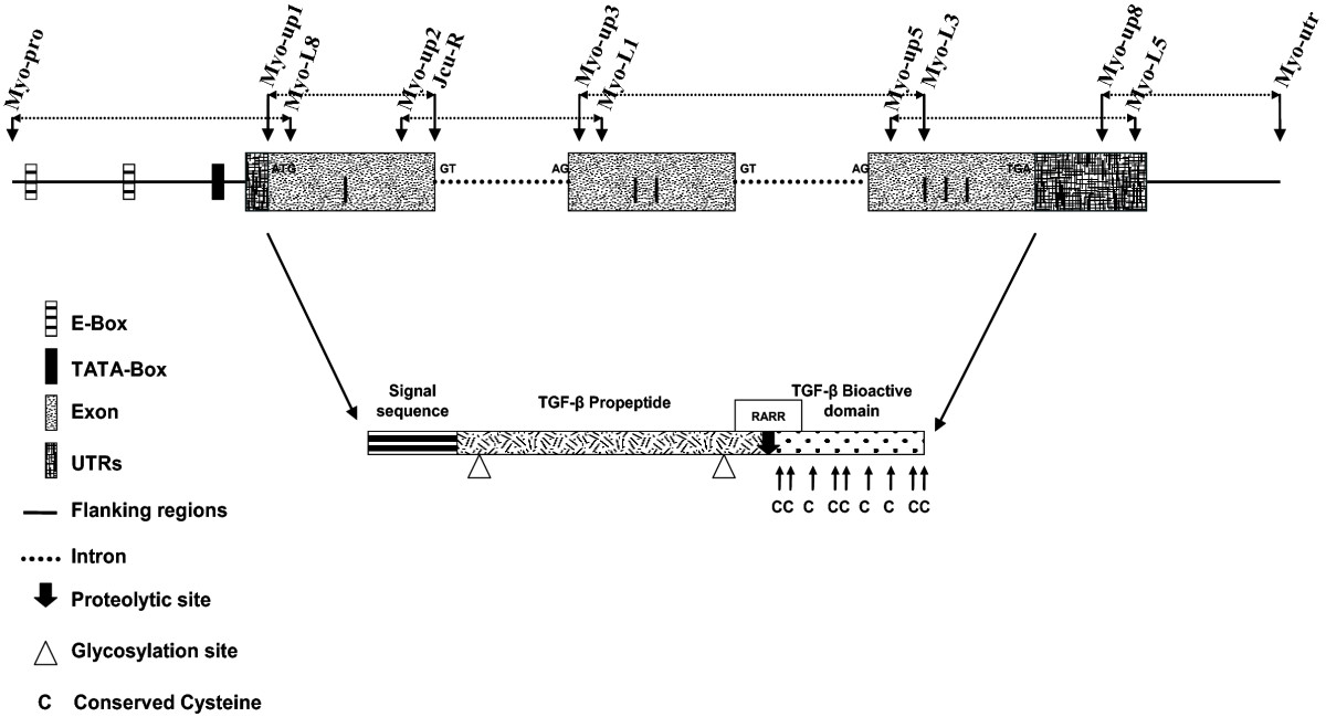https://static-content.springer.com/image/art%3A10.1186%2F1471-2164-9-82/MediaObjects/12864_2007_Article_1276_Fig1_HTML.jpg