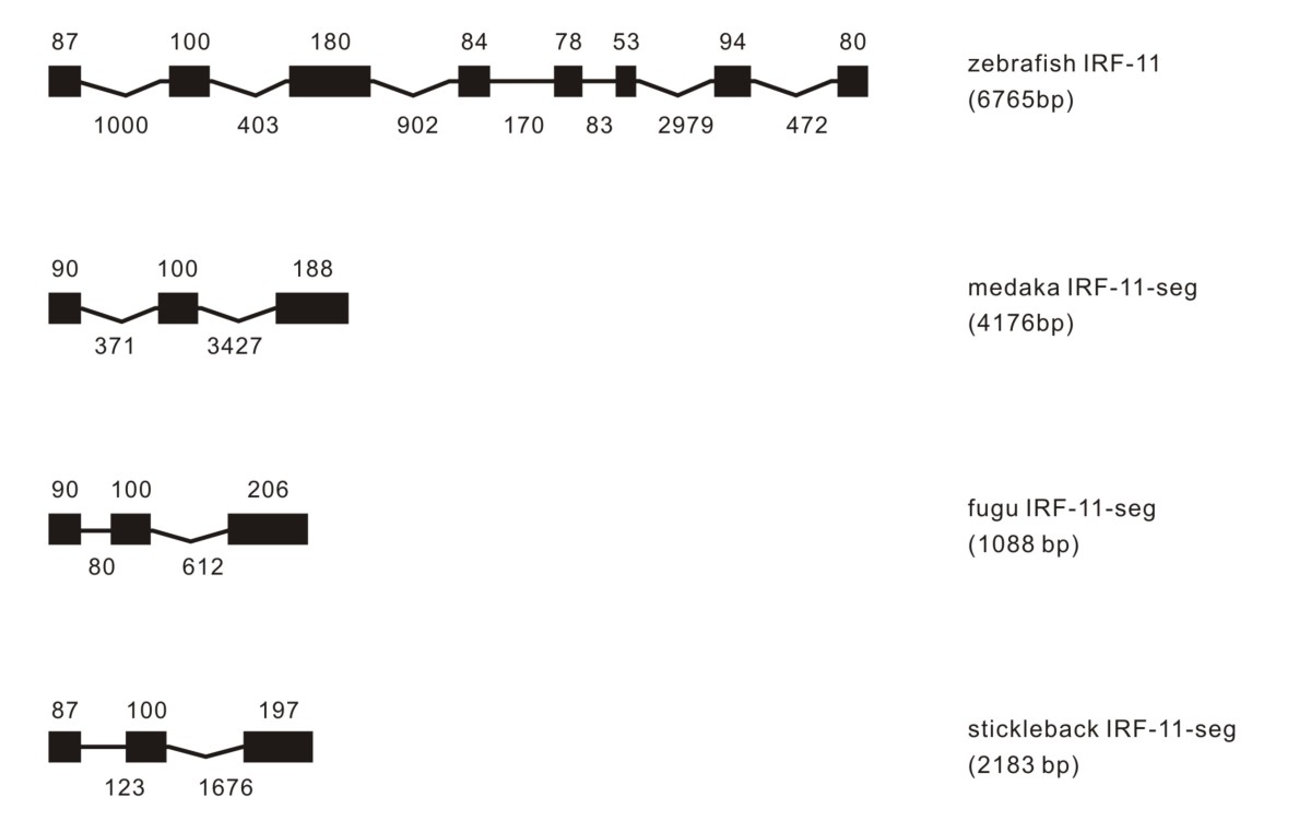 https://static-content.springer.com/image/art%3A10.1186%2F1471-2172-11-22/MediaObjects/12865_2009_Article_306_Fig11_HTML.jpg