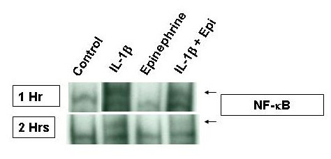 https://static-content.springer.com/image/art%3A10.1186%2F1471-2172-5-22/MediaObjects/12865_2004_Article_59_Fig7_HTML.jpg