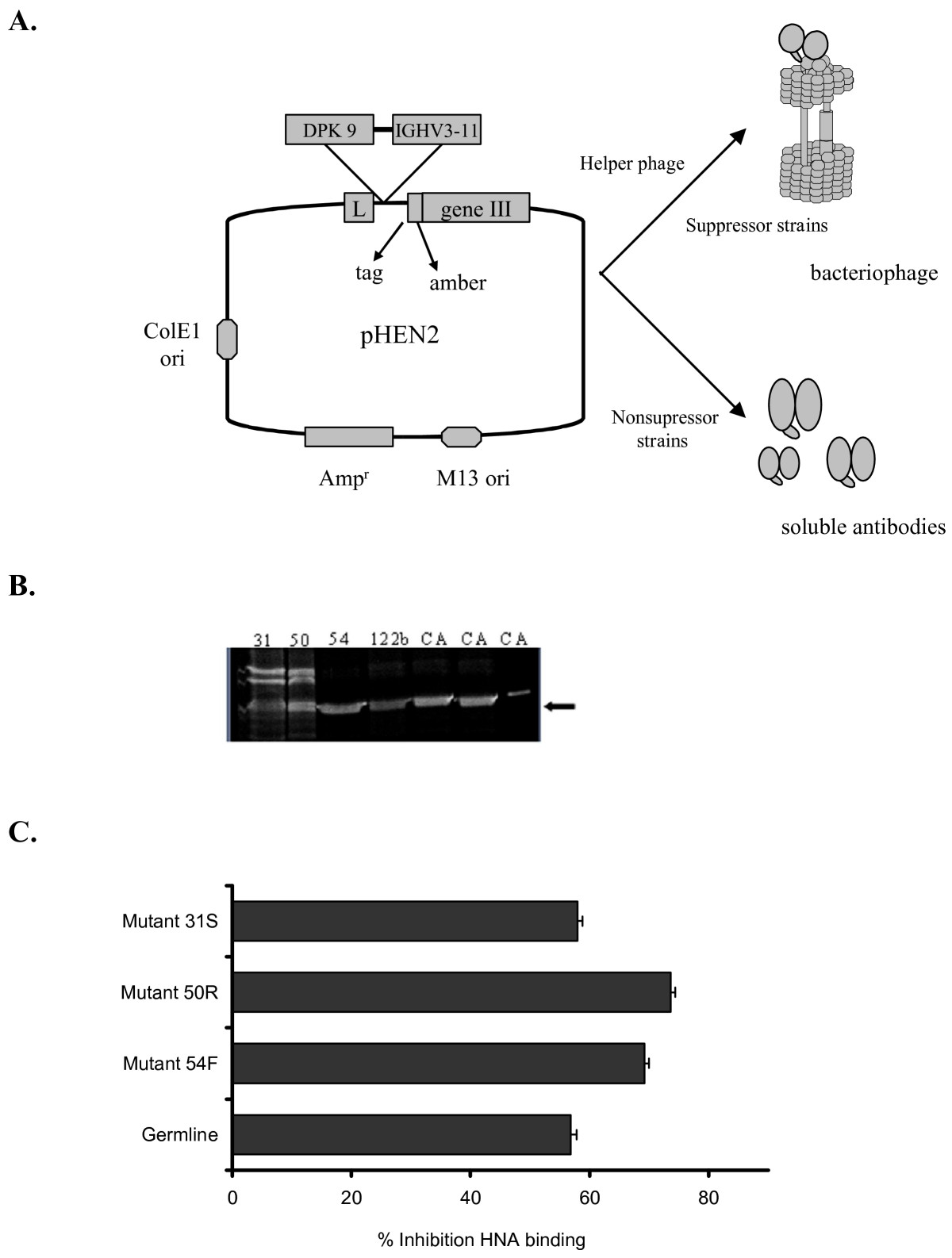 https://static-content.springer.com/image/art%3A10.1186%2F1471-2172-8-3/MediaObjects/12865_2006_Article_117_Fig6_HTML.jpg