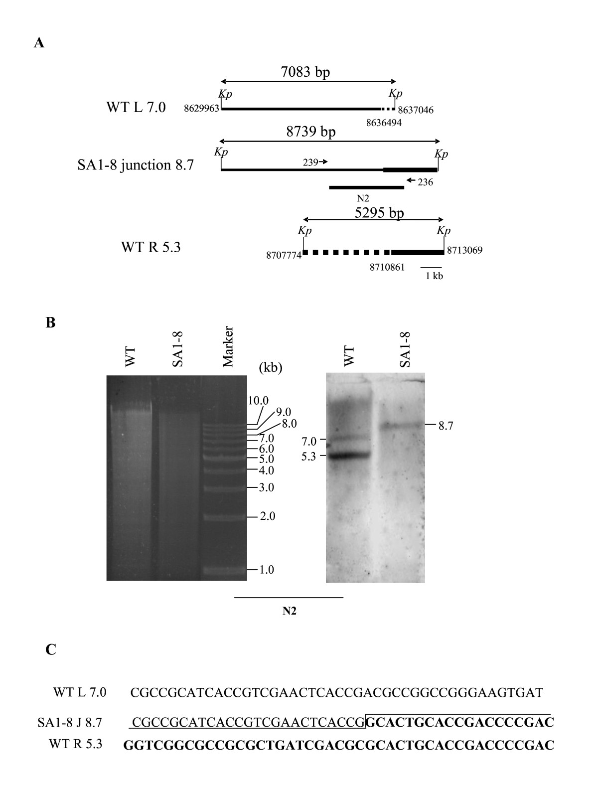 https://static-content.springer.com/image/art%3A10.1186%2F1471-2180-10-198/MediaObjects/12866_2010_Article_1154_Fig5_HTML.jpg