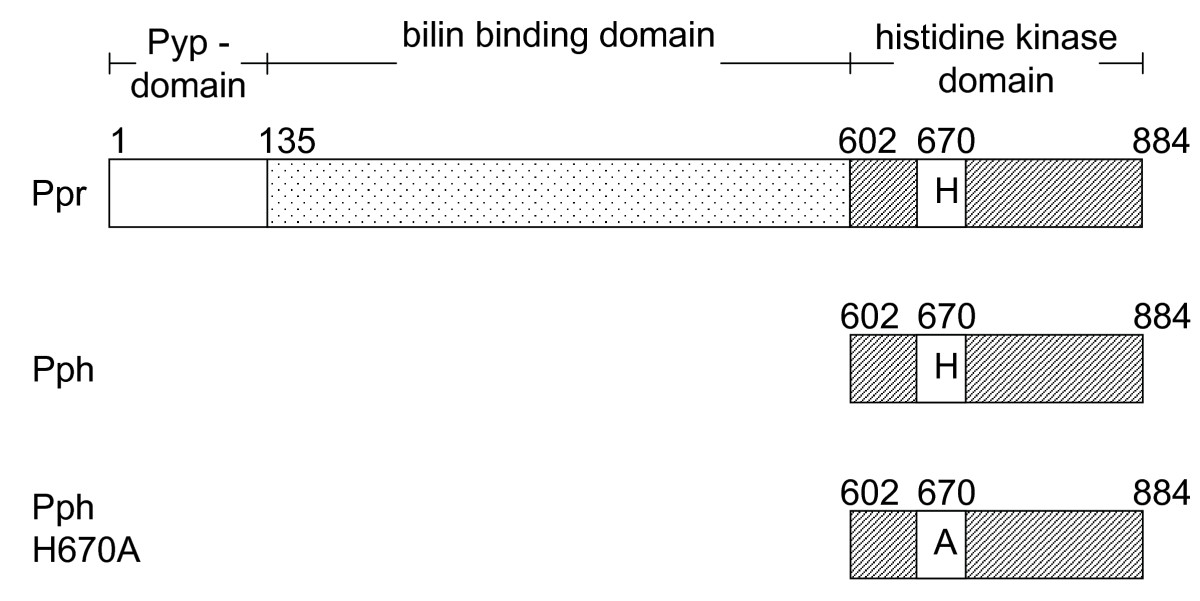 https://static-content.springer.com/image/art%3A10.1186%2F1471-2180-10-281/MediaObjects/12866_2010_Article_1237_Fig1_HTML.jpg