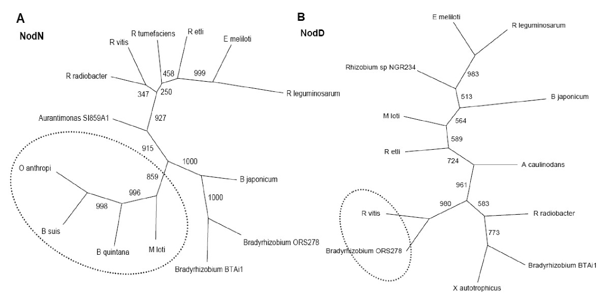 https://static-content.springer.com/image/art%3A10.1186%2F1471-2180-10-37/MediaObjects/12866_2009_Article_993_Fig4_HTML.jpg