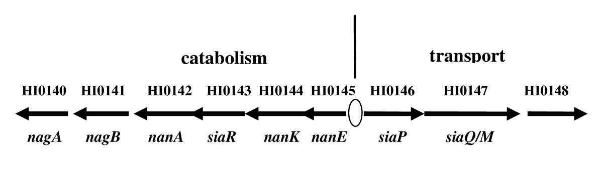 https://static-content.springer.com/image/art%3A10.1186%2F1471-2180-10-48/MediaObjects/12866_2009_Article_1004_Fig1_HTML.jpg